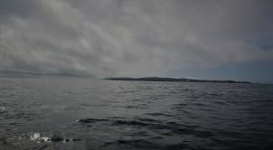 Shetland (100)