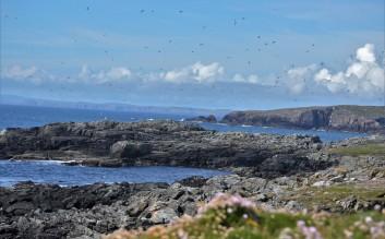 Shetland (110)