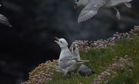 Shetland (114)