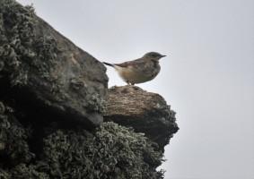 Shetland (116)