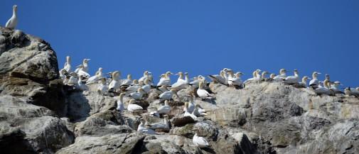 Shetland (12)