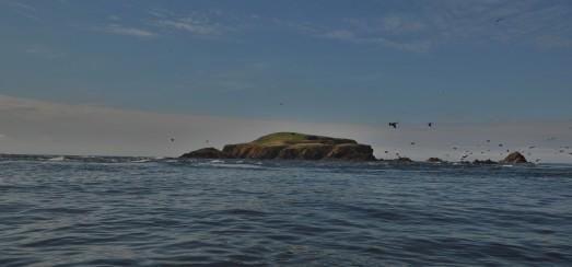 Shetland (128)