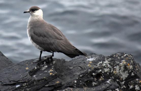 Shetland (136)
