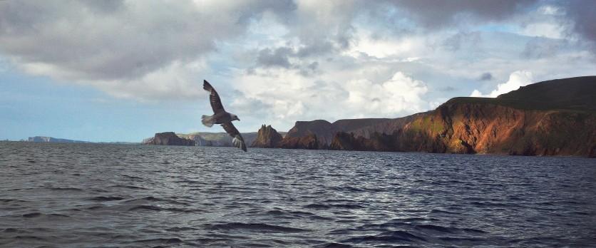 Shetland (35)