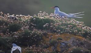 Shetland (38)