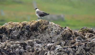 Shetland (46)