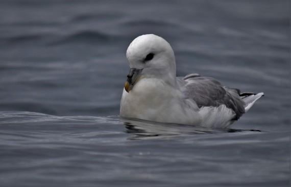 Shetland (55)