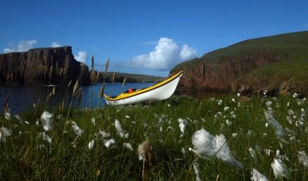 Shetland (60)