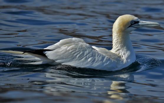 Shetland (64)