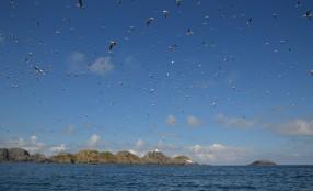 Shetland (8)