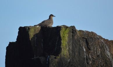 Shetland (86)