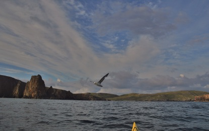 Shetland (88)