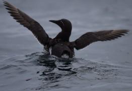 Shetland (96)