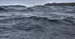Shetland (97)