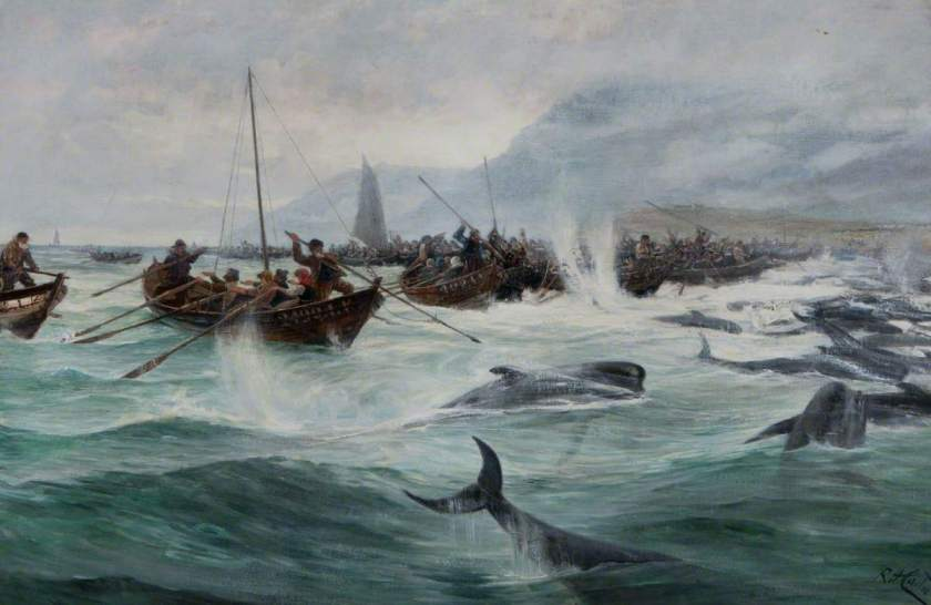 Carter, Richard Harry, 1839-1911; Driving Bottle-Nosed Whales - Shetland, 1891